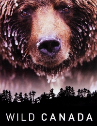 Watch Movie Kodiak - Season 1