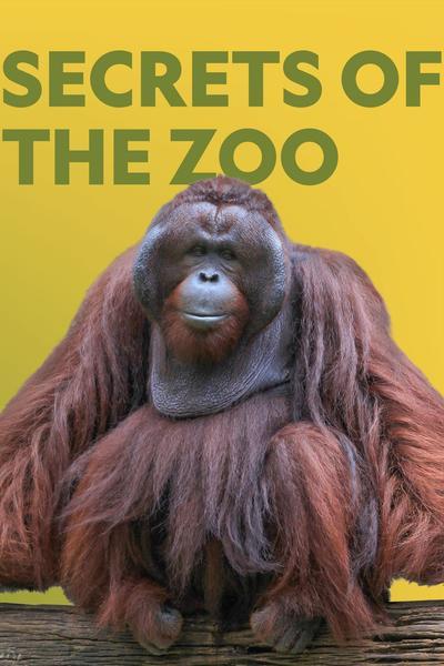 Watch Movie Secrets of the Zoo - Season 4