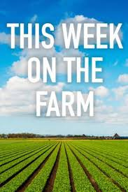 Watch Movie This Week on the Farm - Season 1